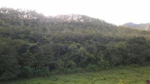Terreno En Ventaen Darien, Darien, Panama, PA RAH: 20-3963
