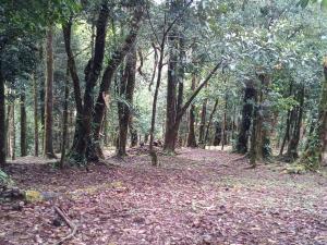 Terreno En Ventaen Chame, Sora, Panama, PA RAH: 20-5421