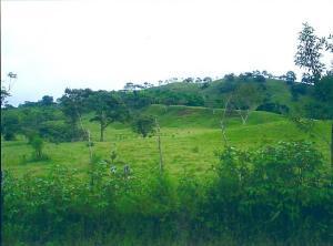 Terreno En Ventaen Panama Oeste, Capira, Panama, PA RAH: 20-6389