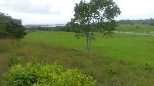 Terreno En Ventaen La Chorrera, Chorrera, Panama, PA RAH: 20-9374