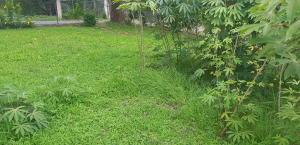 Terreno En Ventaen Cocle, Cocle, Panama, PA RAH: 20-10292
