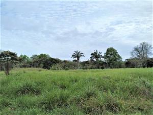 Terreno En Ventaen La Chorrera, Chorrera, Panama, PA RAH: 20-11089