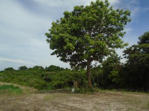 Terreno En Ventaen San Carlos, El Espino, Panama, PA RAH: 21-151