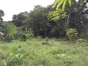 Terreno En Ventaen Chilibre, Chilibre Centro, Panama, PA RAH: 21-507