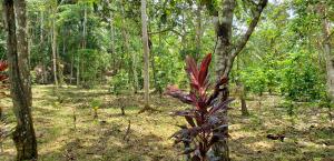 Terreno En Ventaen Capira, Villa Carmen, Panama, PA RAH: 21-1369
