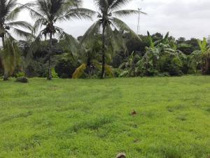 Terreno En Ventaen Panama, Las Cumbres, Panama, PA RAH: 21-1729