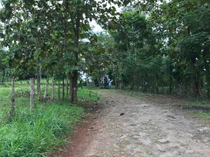Terreno En Ventaen Panama Oeste, Arraijan, Panama, PA RAH: 21-2191