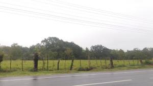 Terreno En Ventaen Chiriqui, Chiriqui, Panama, PA RAH: 21-2808