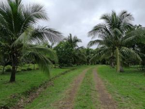 Terreno En Ventaen San Jose De David, Bijagual, Panama, PA RAH: 21-2869
