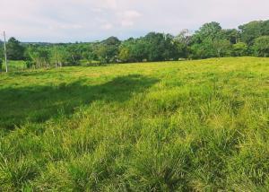 Terreno En Ventaen La Chorrera, Chorrera, Panama, PA RAH: 21-2852