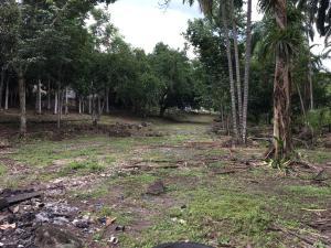 Terreno En Alquileren Baru, Progreso, Panama, PA RAH: 21-3062