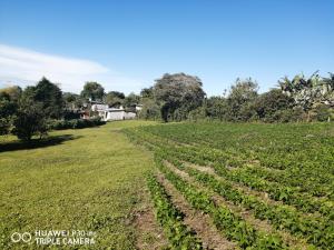 Terreno En Ventaen Dolega, Potrerillos, Panama, PA RAH: 21-3574