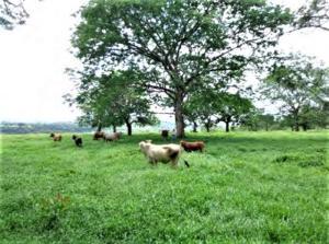 Terreno En Ventaen Chiriqui, Chiriqui, Panama, PA RAH: 21-3718