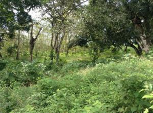 Terreno En Ventaen Chilibre, Chilibre Centro, Panama, PA RAH: 21-5068
