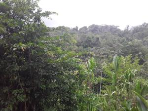 Terreno En Ventaen Cocle, Cocle, Panama, PA RAH: 21-5952