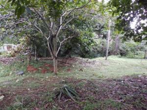 Terreno En Ventaen La Chorrera, Chorrera, Panama, PA RAH: 21-6181