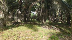 Terreno En Ventaen Remedios, Santa Lucia, Panama, PA RAH: 21-6473