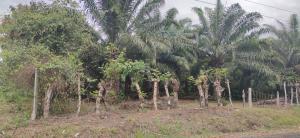 Terreno En Ventaen Remedios, El Porvenir, Panama, PA RAH: 21-6515