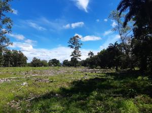 Terreno En Ventaen Boquerón, Pedregal, Panama, PA RAH: 21-6731