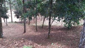 Terreno En Ventaen Pacora, Cerro Azul, Panama, PA RAH: 21-7911
