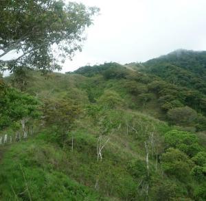 Terreno En Ventaen Tonosi, Cambutal, Panama, PA RAH: 21-8156