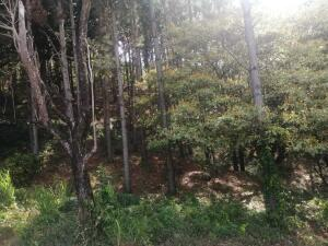 Terreno En Alquileren San Carlos, San Carlos, Panama, PA RAH: 21-8199