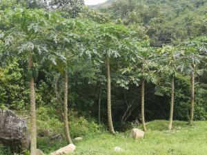 Terreno En Ventaen Penonome, Tulu, Panama, PA RAH: 21-8354