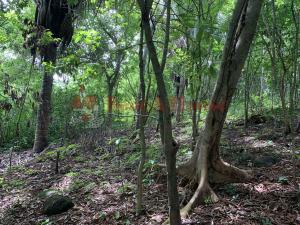 Terreno En Ventaen Chilibre, Maria Eugenia, Panama, PA RAH: 21-8934
