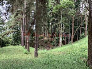 Terreno En Ventaen Pacora, Cerro Azul, Panama, PA RAH: 21-11729