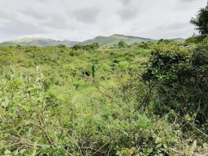 Terreno En Ventaen Penonome, Toabre, Panama, PA RAH: 21-11774