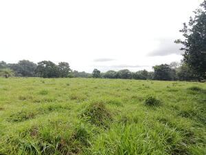 Terreno En Alquileren David, David, Panama, PA RAH: 22-149