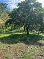 Terreno En Ventaen Sona, Santa Catalina, Panama, PA RAH: 22-221