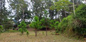 Terreno En Ventaen Pacora, Cerro Azul, Panama, PA RAH: 22-994