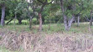 Terreno En Ventaen San Carlos, San Carlos, Panama, PA RAH: 22-1460