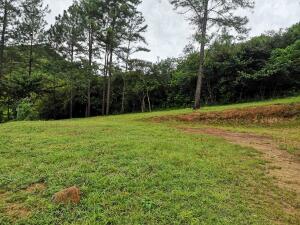 Terreno En Ventaen Penonome, Tulu, Panama, PA RAH: 22-2409