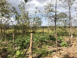 Terreno En Ventaen Chame, Gorgona, Panama, PA RAH: 22-2912