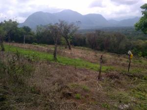 Terreno En Alquileren Cocle, Cocle, Panama, PA RAH: 22-3044