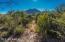 Natural vegetation that the wildlife LOVE