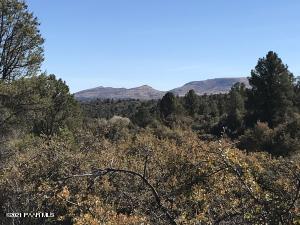 Views & Trees!