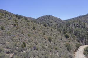 0 Forest Drive, Prescott, AZ 86305