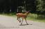 C1529 Towamensing Trl, Albrightsville, PA 18210