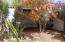 Nuevo Leon 2-B - Backyard