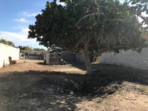 M343 L11 Av. Dimas Noriega, Puerto Penasco,