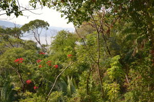 A2 Paseo de las Madre Perlas, Upper Conchas Chinas Lot, Puerto Vallarta, JA