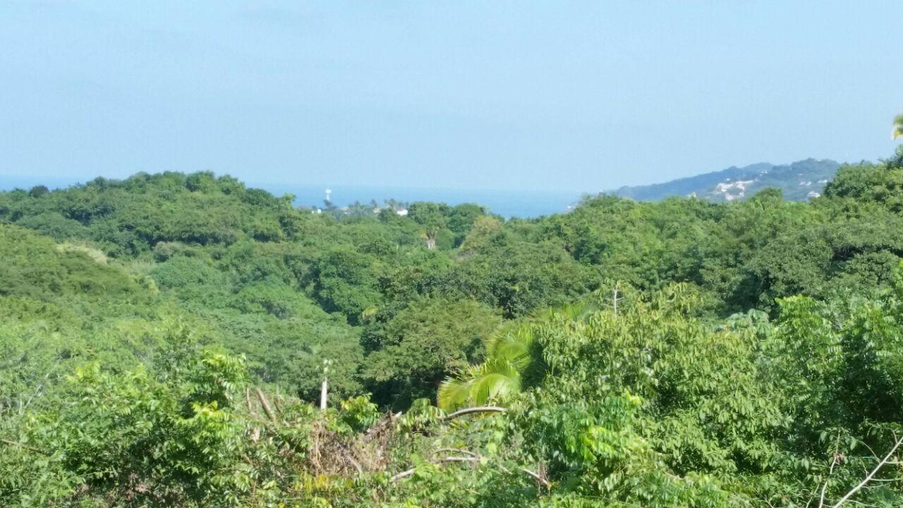 Selva Vista