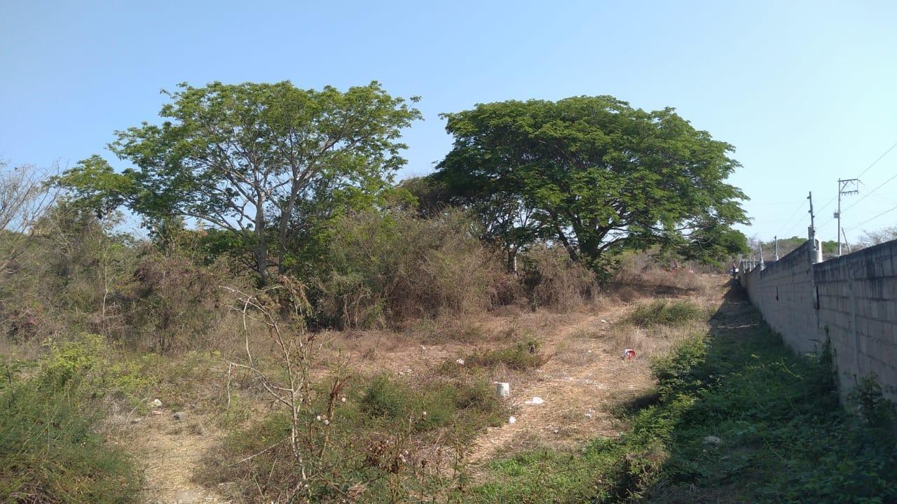 Terreno Mezcales