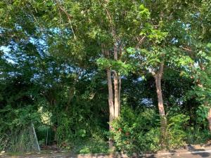 l 25 Retorno de Las Mariposas, Lote Las Mariposas, Riviera Nayarit, NA