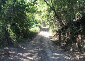 PVRPV - Selva_Vista_Sayulita_Real_Estate_Mexico_