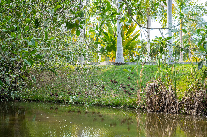 Flamingos, 3 Bedrooms Bedrooms, ,4.5 BathroomsBathrooms,House,For Sale,Paseo del Palmar,20235