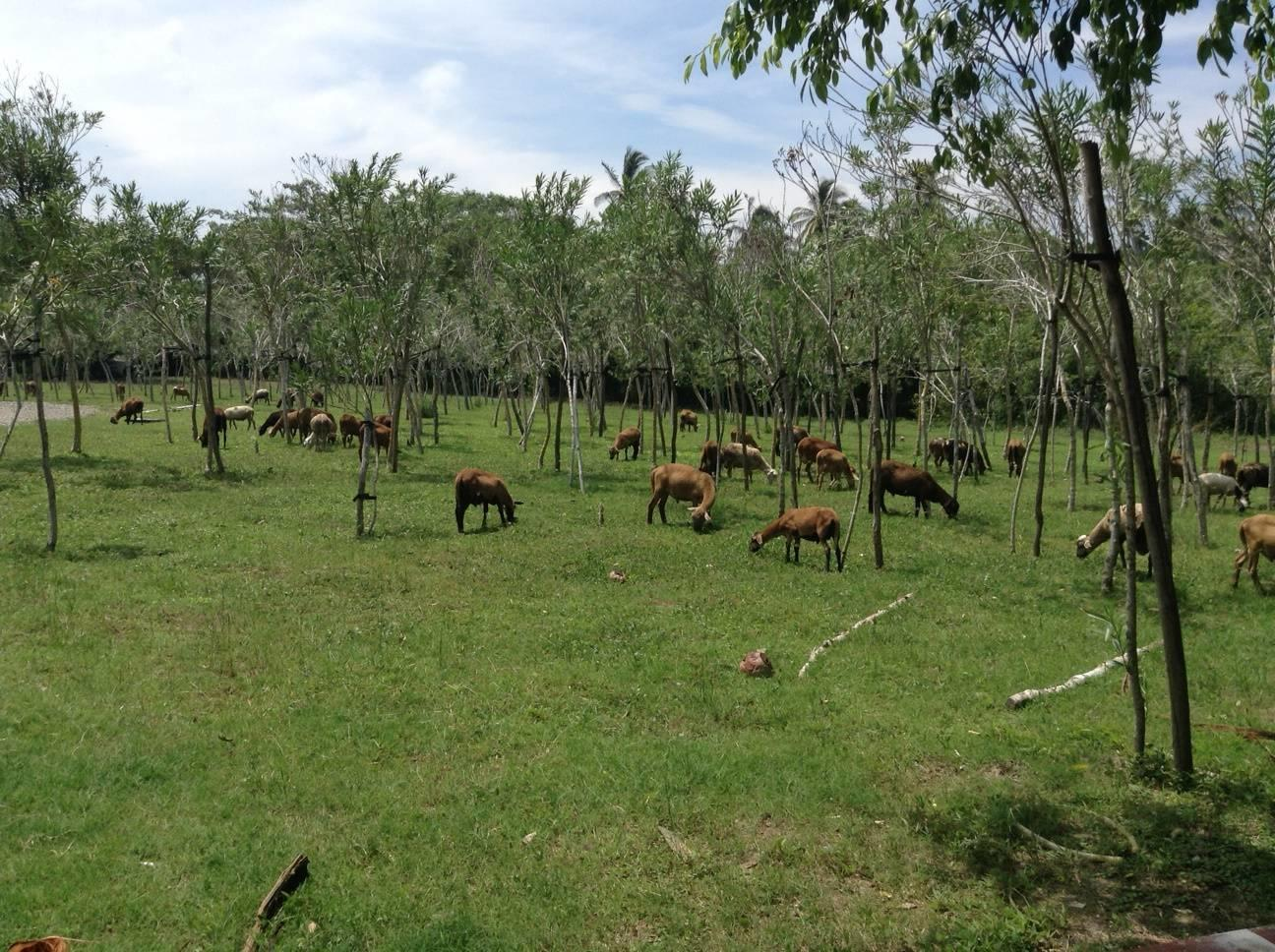 Tomatlan, ,Land,For Sale,Playon de Mismaloya,20807